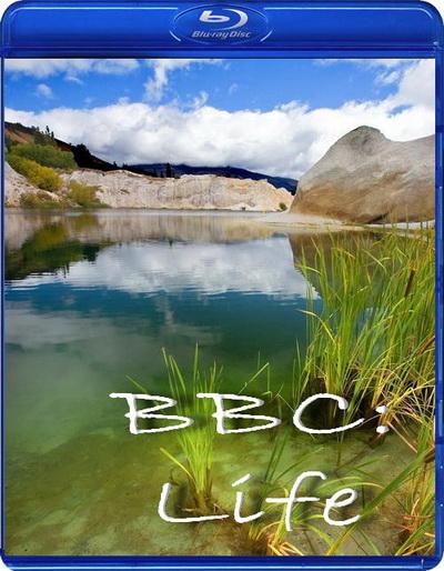 BBC: Жизнь / BBC: Life (2009)