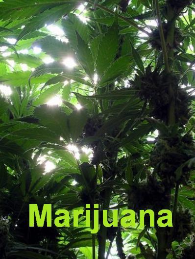 Супертрава / Inside: Marijuana (SATRip/2009)
